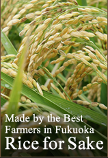 Made by the Best Farmers in Fukuoka - Rice for Sake