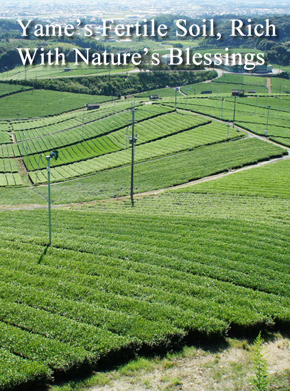 Yame's Fertile Soil, Rich With Nature's Blessings