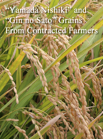 'Yamada Nishiki' and 'Gin no Sato' Grains From Contracted Farmers
