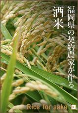 福岡県の契約農家が作る、酒米